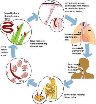 Helmint széles szalagféreg kezelés parazita 1. évad 16. epizódja