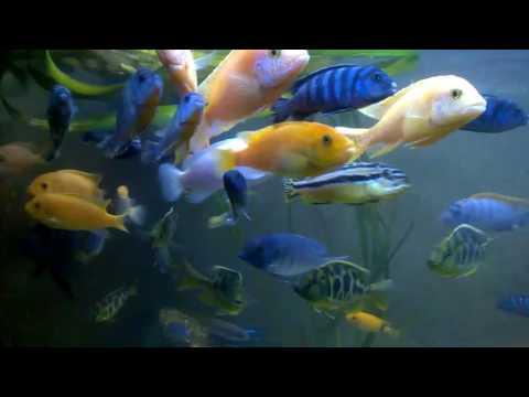 A férgek a halakban