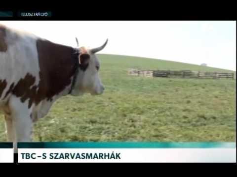 szarvasmarhák férgek elleni gyógyszerek