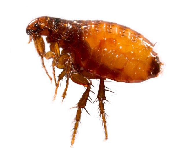a test tisztítása az ellenségekkel a parazitáktól