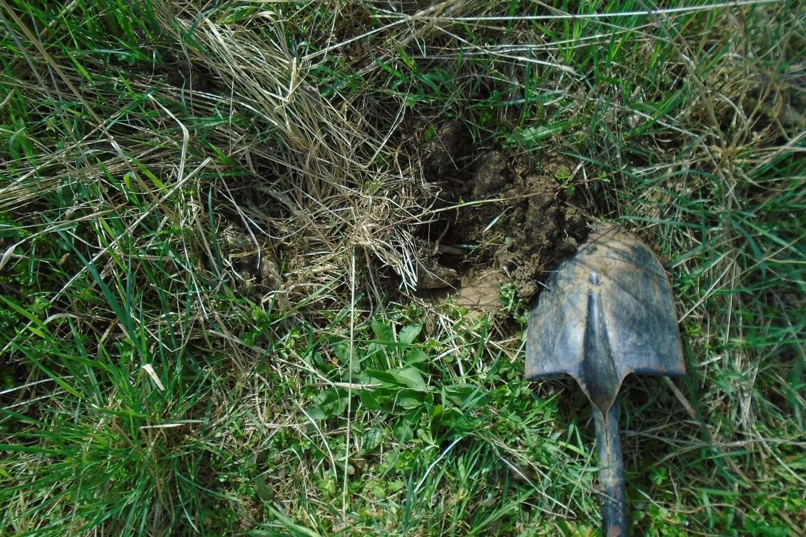Ostorféreg-fertőzés - Helminth tojások a talajban