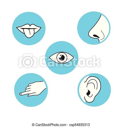 Száj vagy orr szaga, Az orr élettana és működése