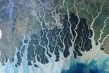 helminthosporium oryzae bengáli éhínség