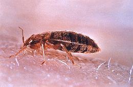 Parazitás betegségek | Kutyatár | Kézikönyvtár