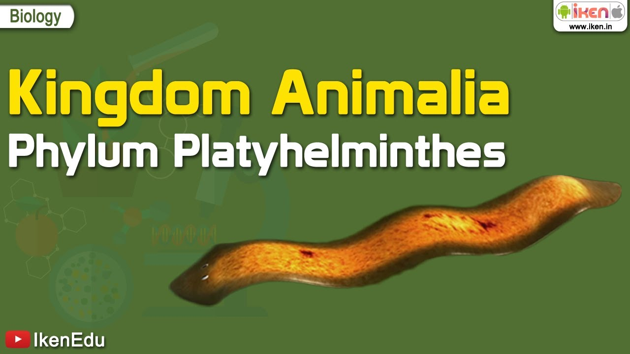 filum platyhelminthes és nemathelminthes