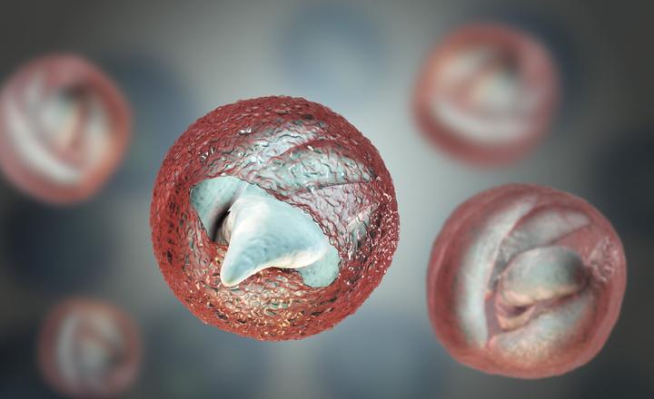 cryptosporidium oocysts and giardia cysts