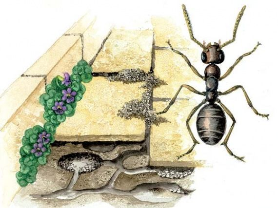 Index - Tech-Tudomány - A hangyák csak a szuperorganizmus sejtjei