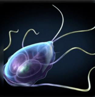 Mironov tisztítja a paraziták testét