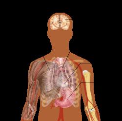 Helminths betegség okozta