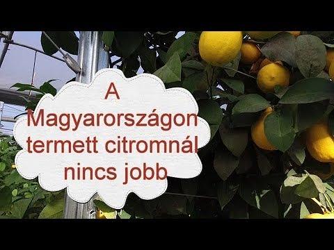 citrom férgek kezelésében paraziták az emberi széklet képekben