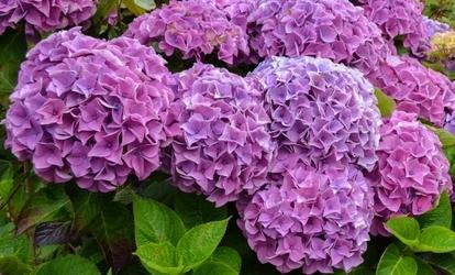 virágok parazitái