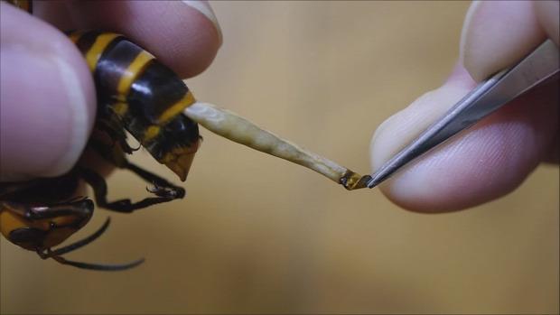 hogyan lehet megszabadulni a férgektől a székletben hogyan lehet legyőzni a parazitákat tea nélkül