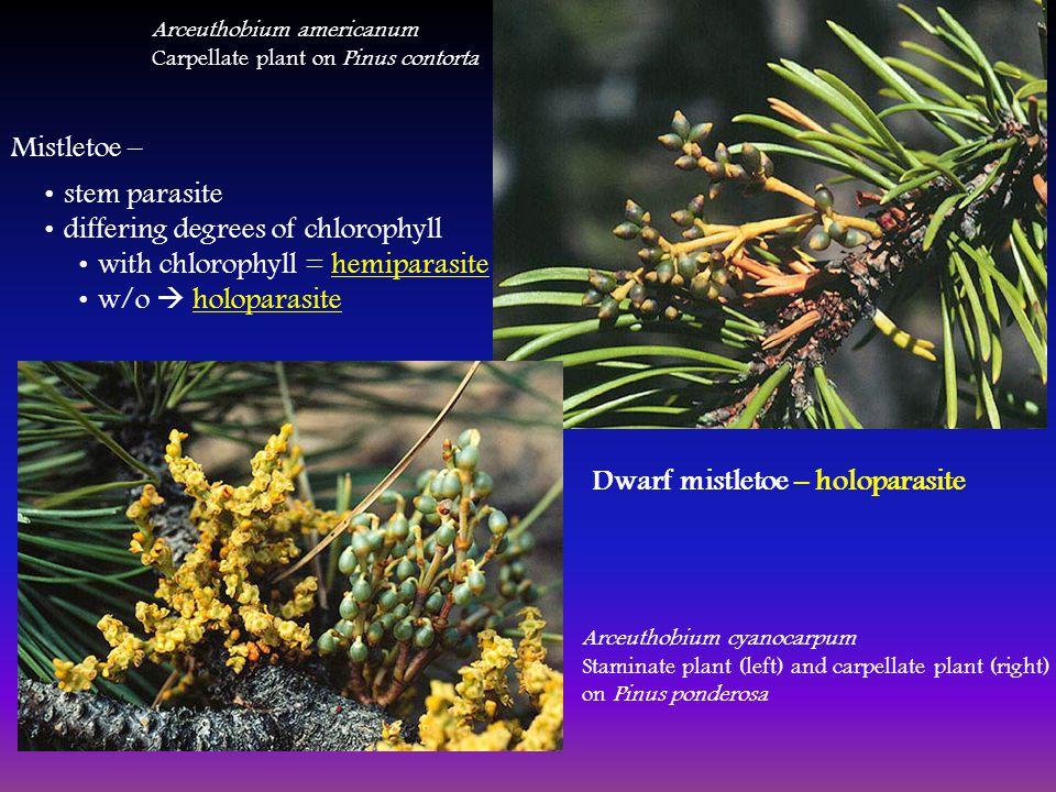 hemiparasites és holoparasites