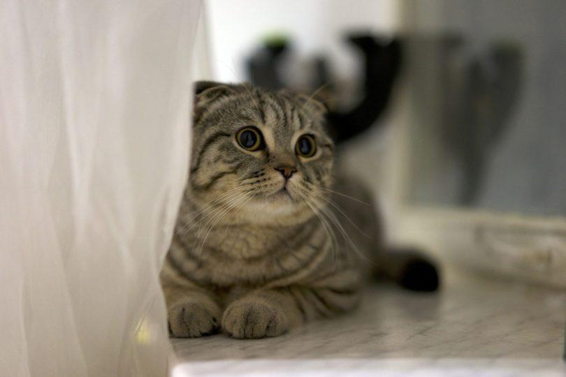 giardia gatos sintomas