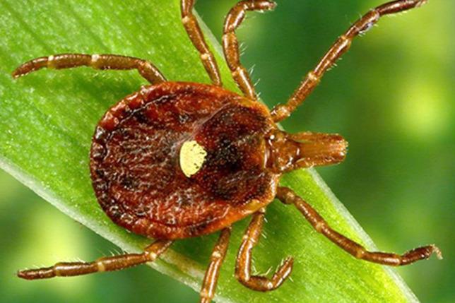 paraziták elleni gyógyszerek emberben